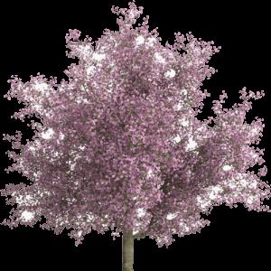 Koop een boom bij eco on me