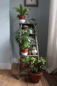 plant-ladder